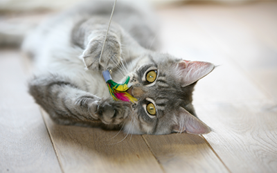 image for Respect Your Cat Day: Celebrate Your Favorite Feline Friend